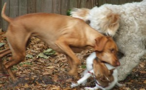 Tess looks like she's punishing her!
