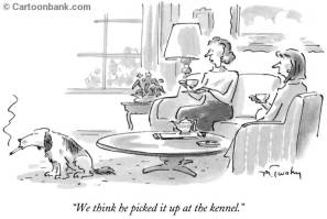 Kennel Behavior Transferrence New Yorker