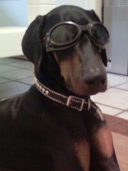 Darwin in his Doggles!