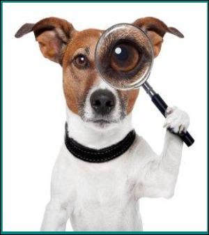 Dog Training Sarasota Bradenton
