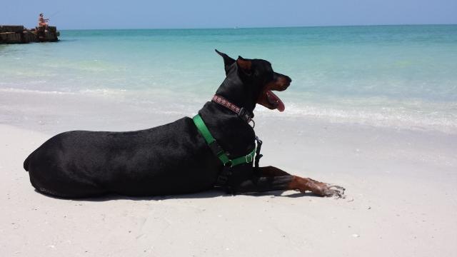 Zoey Siesta Key Beach